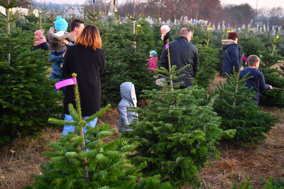 Tannenbaum Selber Schlagen.Wiesbadenaktuell Frische Weihnachtsbaume Direkt Aus Dem