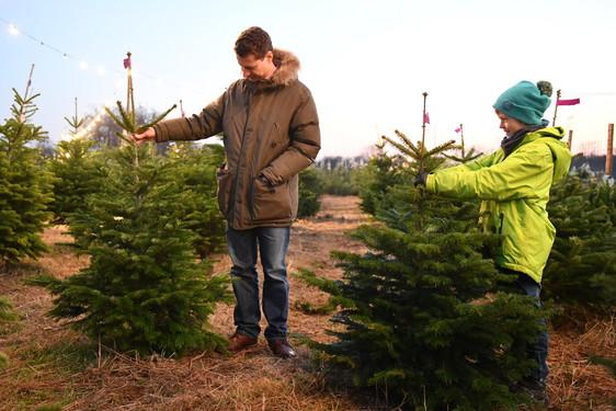 Weihnachtsbaum Natürlich.Wiesbadenaktuell Weihnachtsbaum Kaufen Frisch Und Preiswert