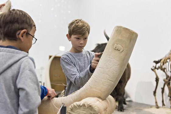 Wiesbadenaktuell Mammut Storys Im Museum Wiesbaden Freier