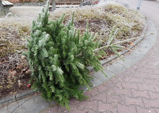 wiesbadenaktuell wann wird der ausgediente weihnachtsbaum abgeholt. Black Bedroom Furniture Sets. Home Design Ideas
